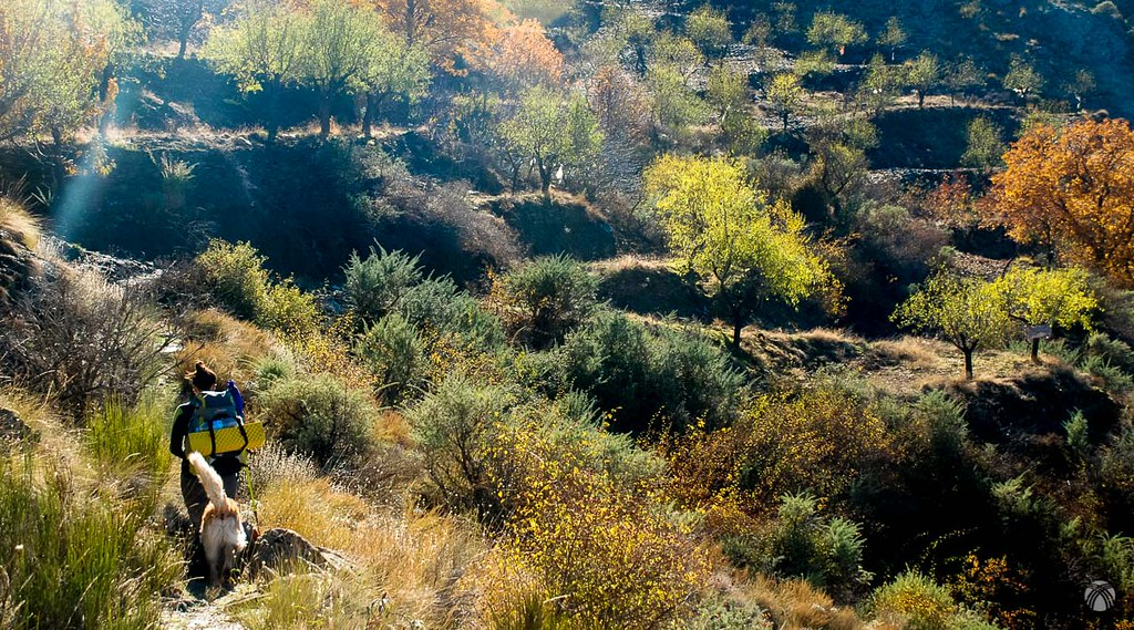 Huelgas y árboles en otoño