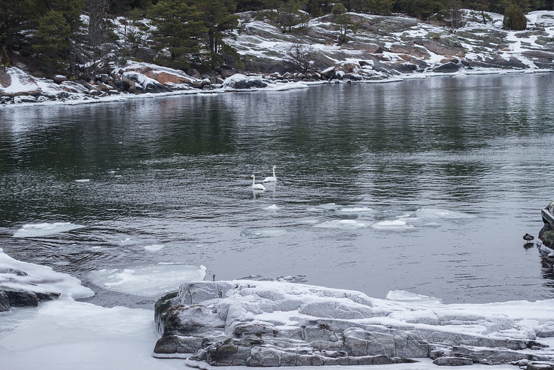Swimming in icecold water