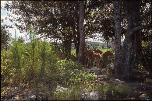 2001 usa slide everglades animaux floride diapo