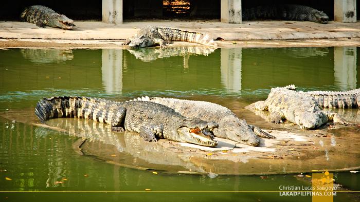Samphran Elephant Ground & Zoo Crocodile Pen