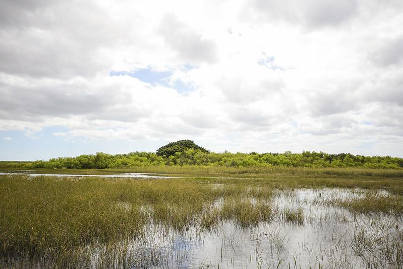 Everglades_19