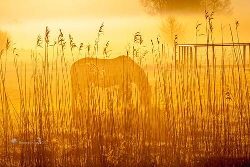You looks like gold to me ......? por Marinus de Keijzer
