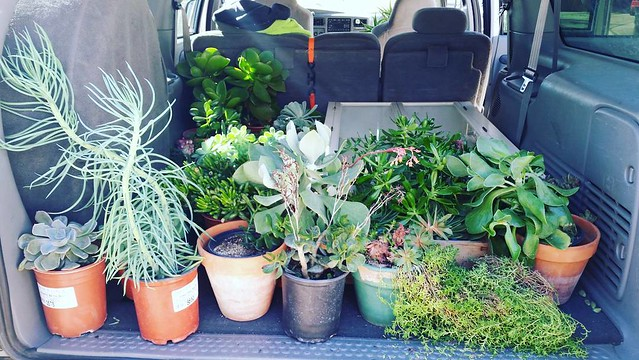 The first load of succulents are going to their new home! #MargaretsSucculents #MovingAgain