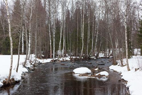 travel snow tree nature finland lens landscape 50mm prime spring outdoor lumi puu luonto joki kevät hankasalmi centralfinland janholanjoki