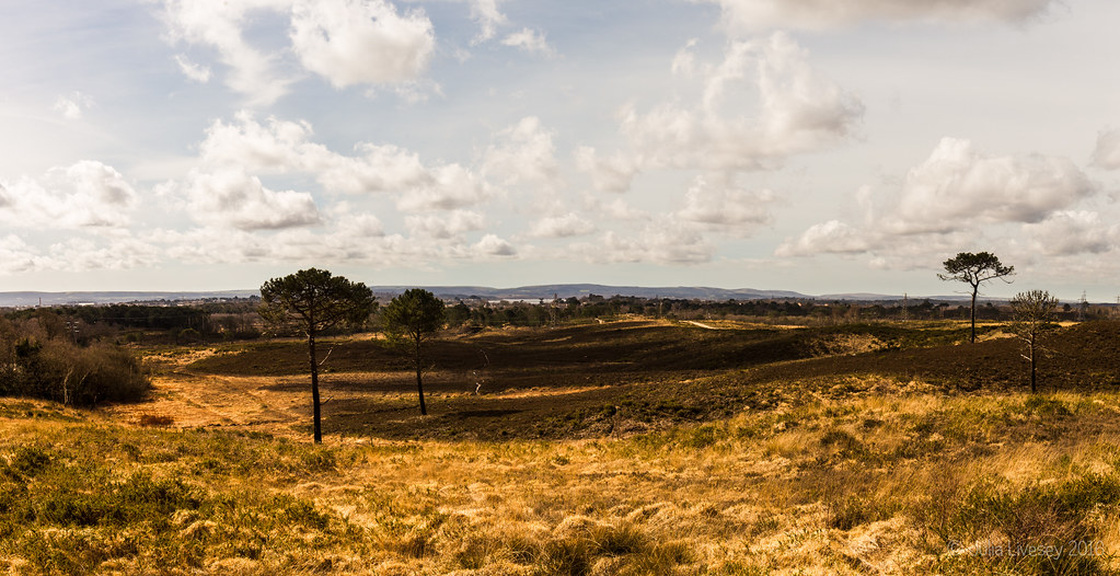 Looking across Upton Heath