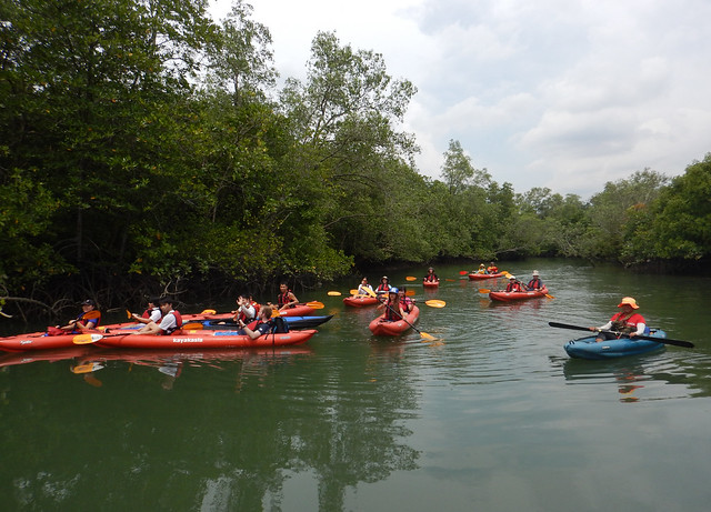 Kayaking at Jelutong mangroves