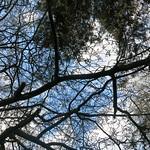 deciduous/evergreen