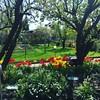 Tulpen im Garten. #ruhryork #gardening #projektgarten