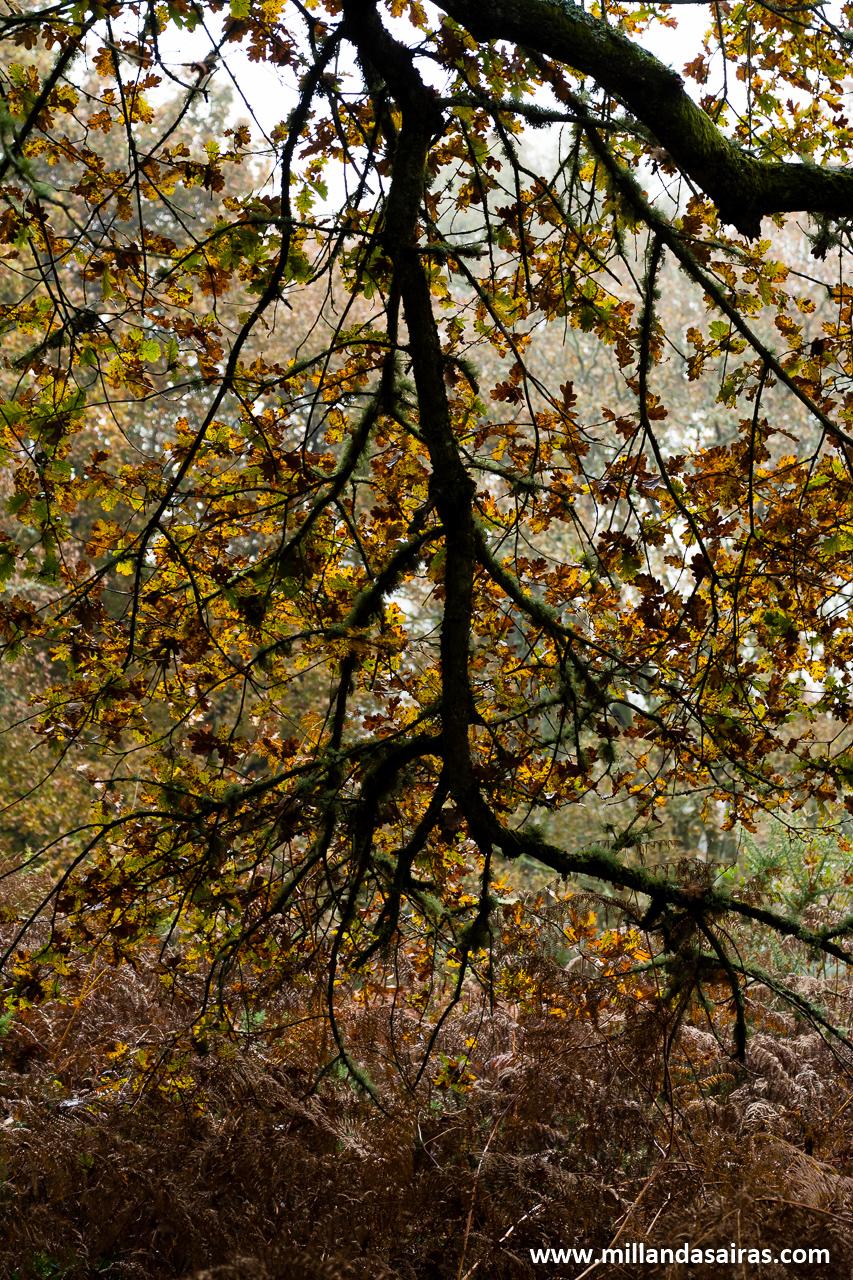 Claroscuros en el bosque da Fervenza