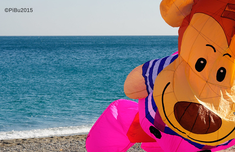 there is a monkey at the sea!