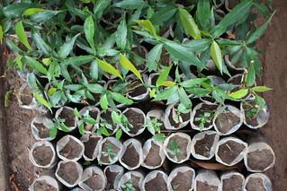 Ho Botanical Garden - seedlings