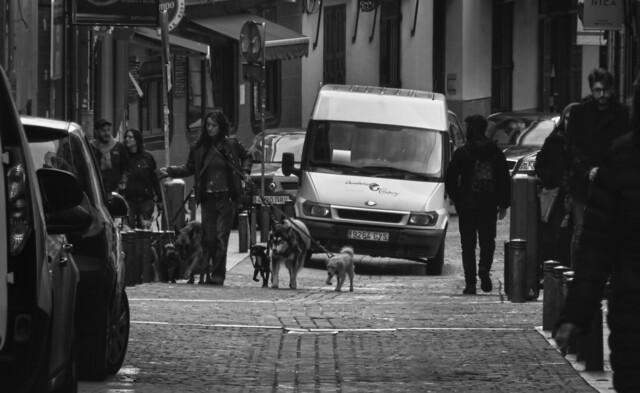 dog-walker on Calle Moratin, Madrid, Spain (2016)