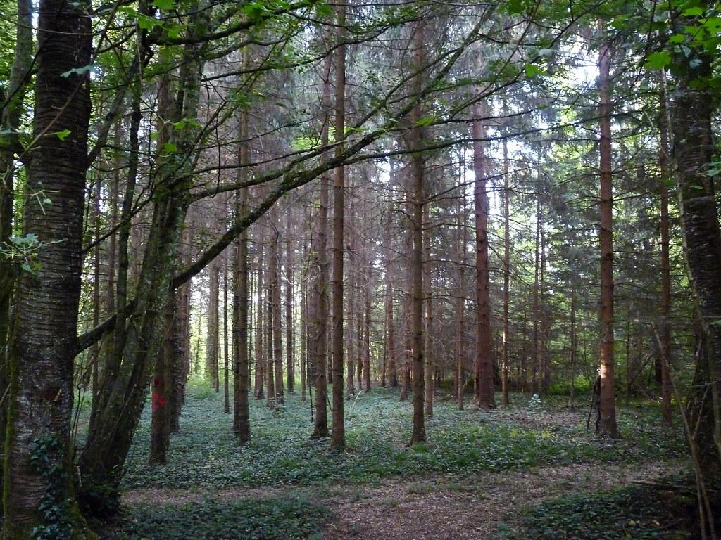 Forêt du bas Jura 24307541406_ffa4706238_b
