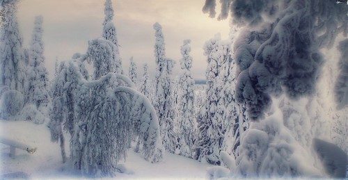 snow finland lapland