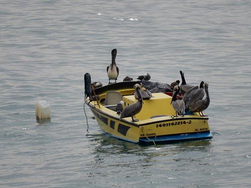 Puerto Vallarta - pelikanenboot