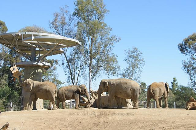 san diego zoo-65web
