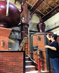 Visite de l'exploitation Marcadier-Barbot, famille de bouilleurs de cru près de #Segonzac au cœur de la Grande Champagne, 1er cru de #cognac  #Charente #PoitouCharentes - Photo of Gondeville