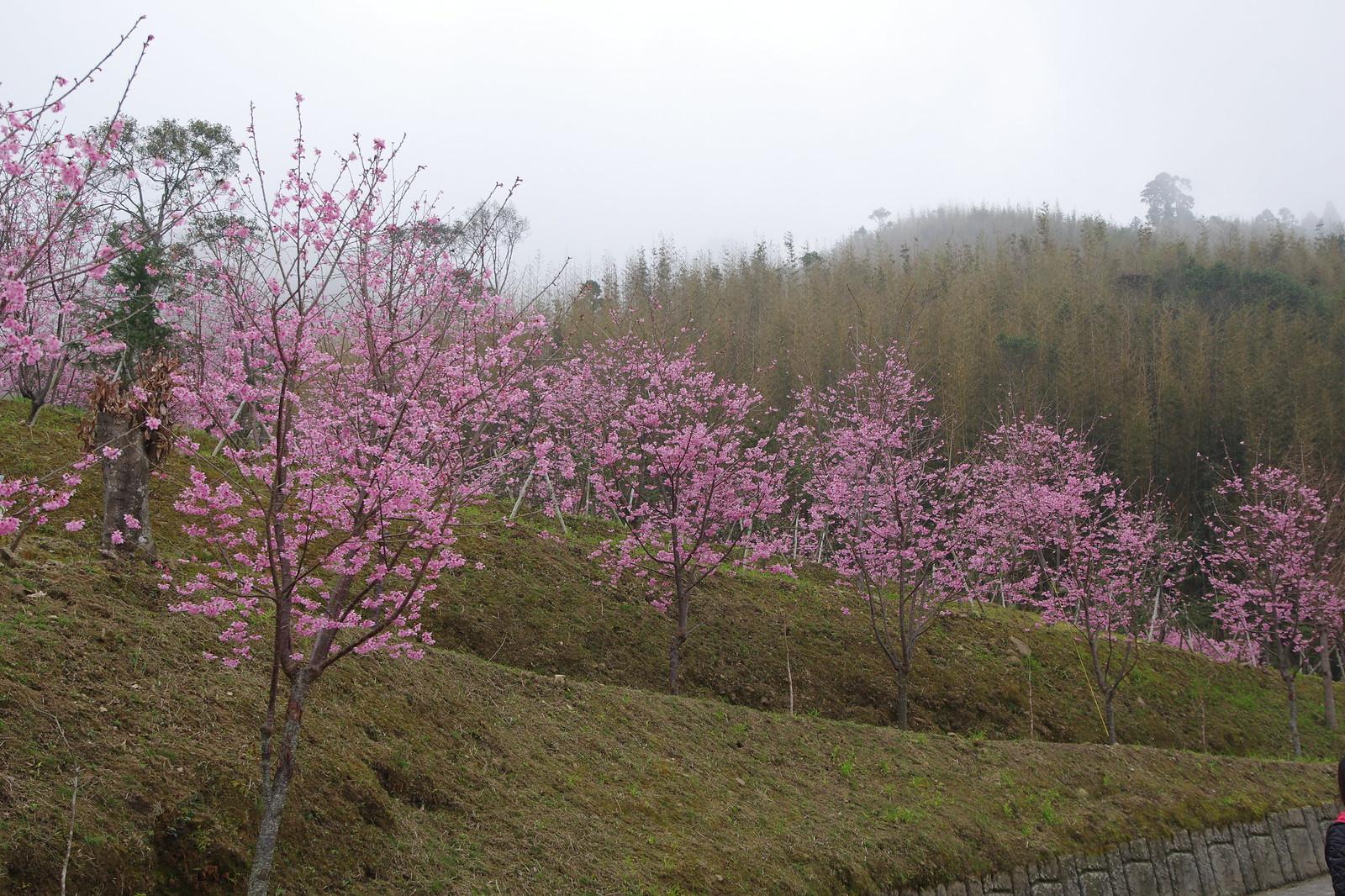 新竹尖石-數碼天空
