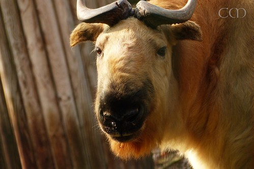 Lovely Takin...