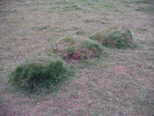 Tussocks, Maggots Moor, Flitwick Moor