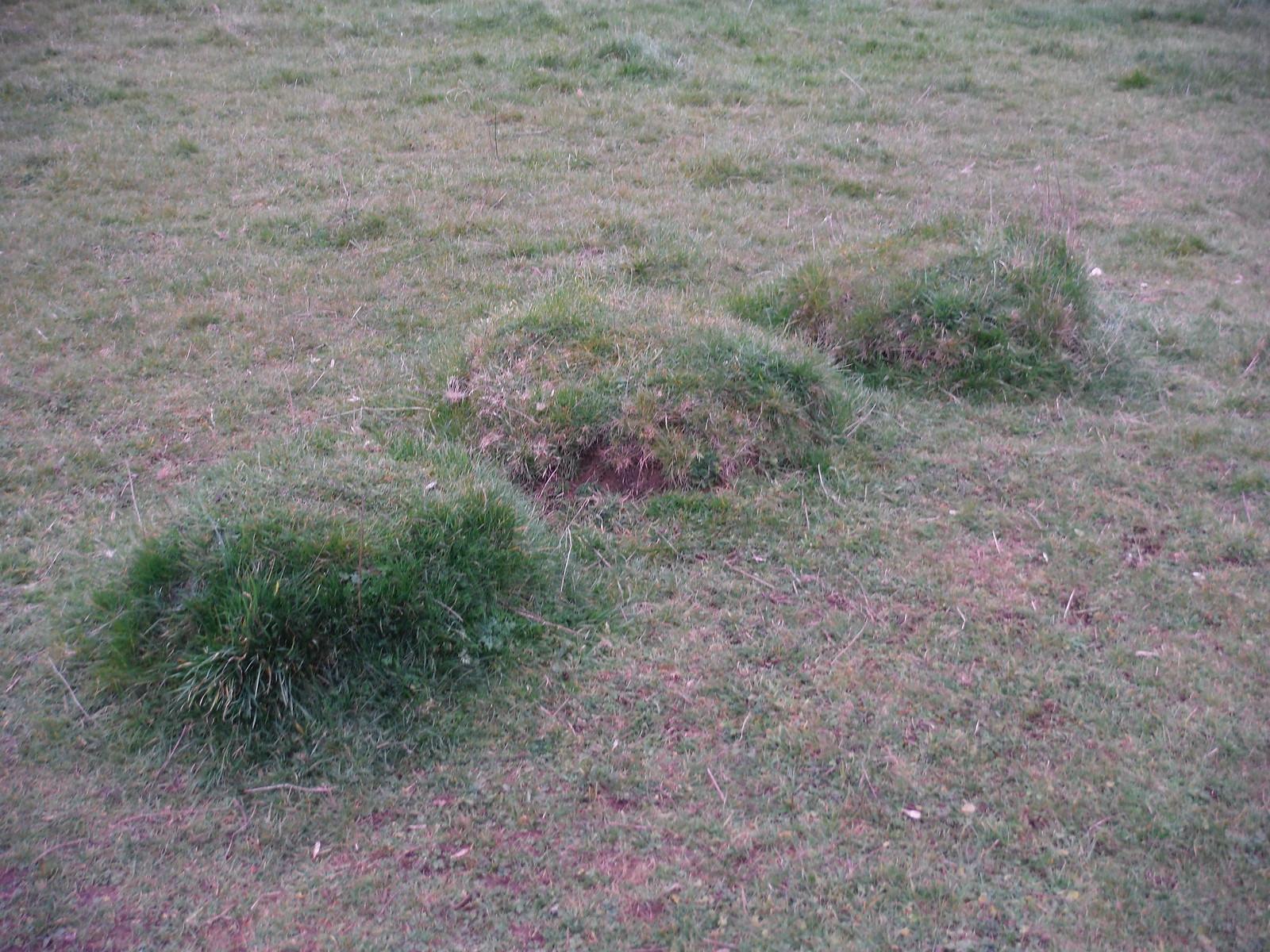 Tussocks, Maggots Moor, Flitwick Moor SWC Walk 231 Flitwick Circular