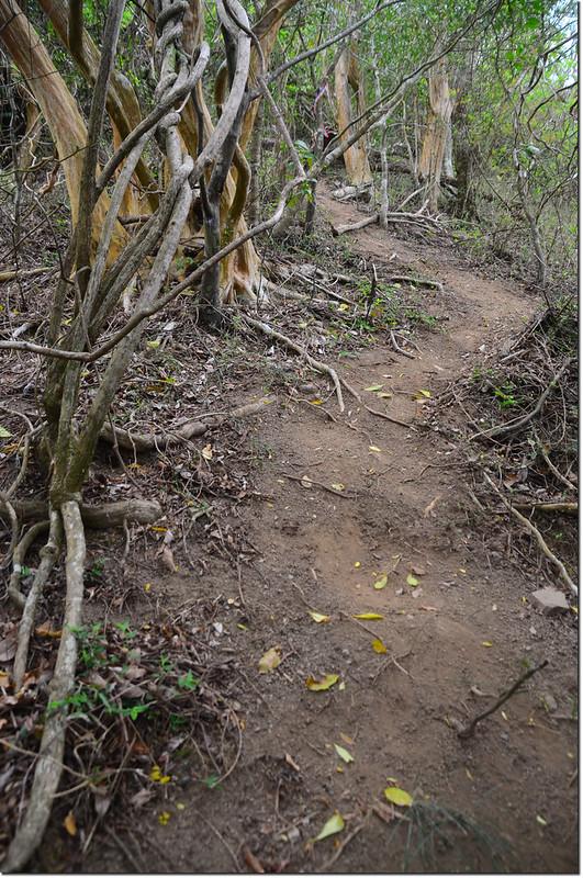 巴層巴墨山登山小徑 2