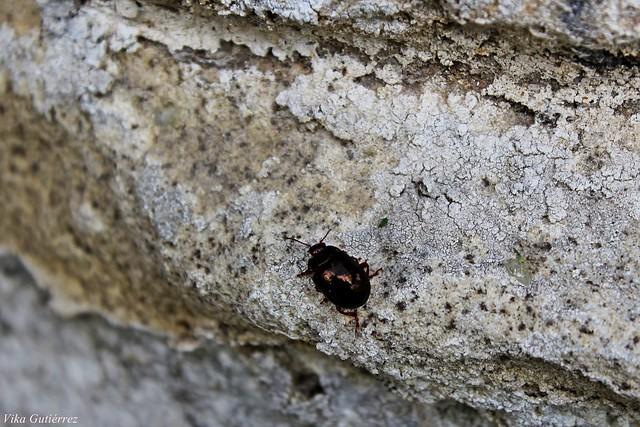 Mundo insectívoro (III)