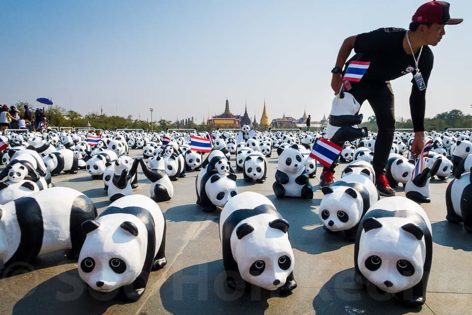 1600 paper mache pandas @ Bangkok, Thailand