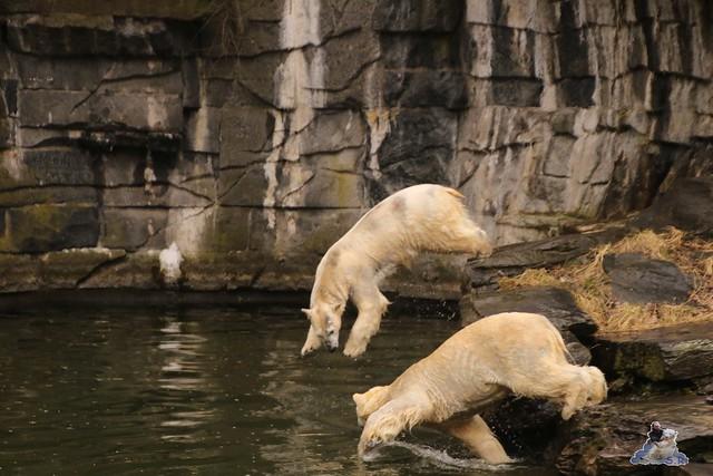 Tierpark Berlin 25.03.2016  089