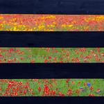 Texas Wildflowers_April 2015_Fences