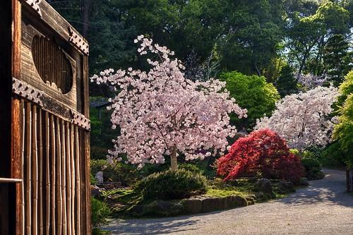 california door wood tree green nature japan wow garden japanese spring gate raw blossom outdoor saratoga cherryblossom brilliant hdr hakonegardens woodengate photomatix fav200 1xp nex6 sel50f18