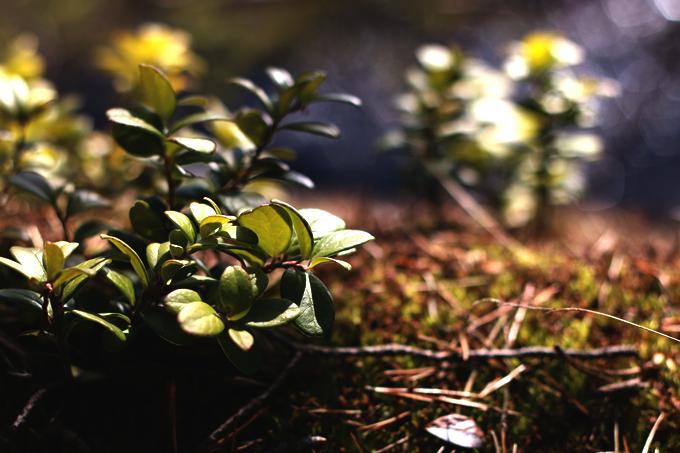 spring 102