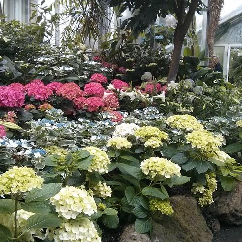 Flowers #toronto #allangardens #gardens #flowers