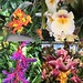 I took a ridiculous number of photos of orchids #nybgorchidshow