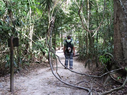 Tikal: mais que regarde Mister J ? Réponse à la prochaine photo....