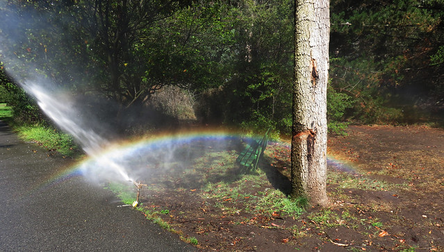 sprinkler, rainbow, carved tree; Golden Gate Park, San Francisco (2015)