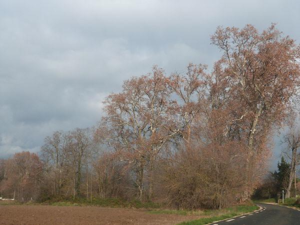 grnads arbres
