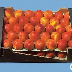 peaches-0128