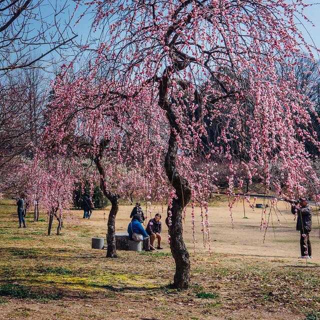 Hirashiba-Park_09
