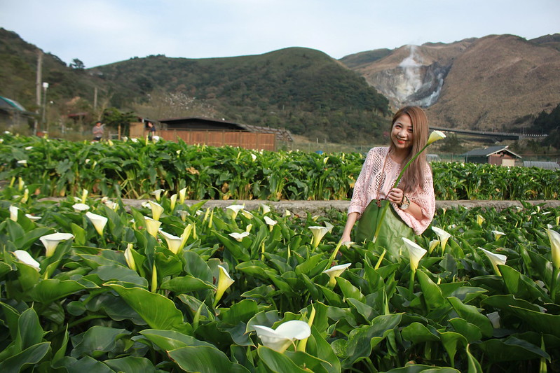 竹子湖採海芋-17度C隨拍 (53)