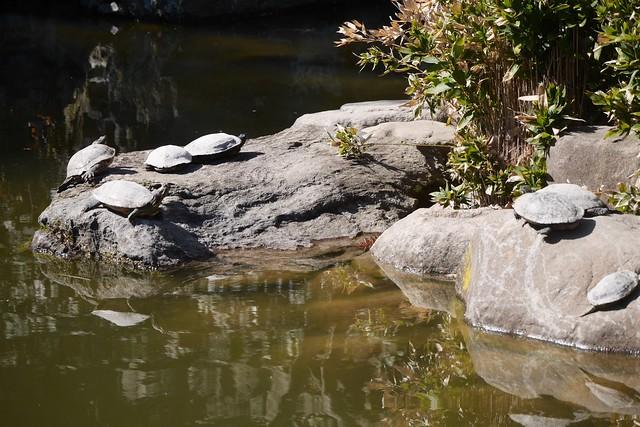 土, 2016-03-26 14:54 - Brooklyn Botanic Garden