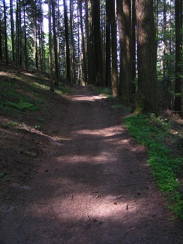 20080511 20878 0901 Jakobus Wald Weg