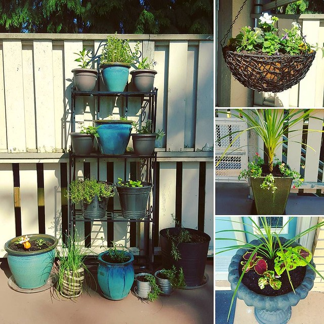 Planted all my pots today, though I'm sure I will buy and plant more because I just can't help myself...