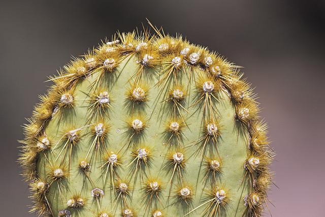 Cactus 3_7D2_020416