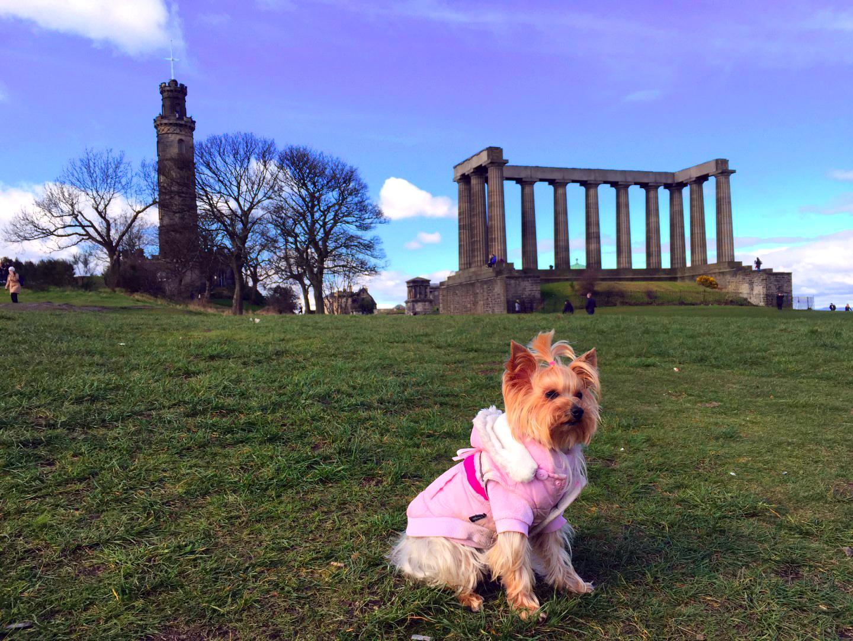Ruta por Escocia en 4 días escocia en 4 días - 26369931790 2ae46f3c66 o - Visitar Escocia en 4 días