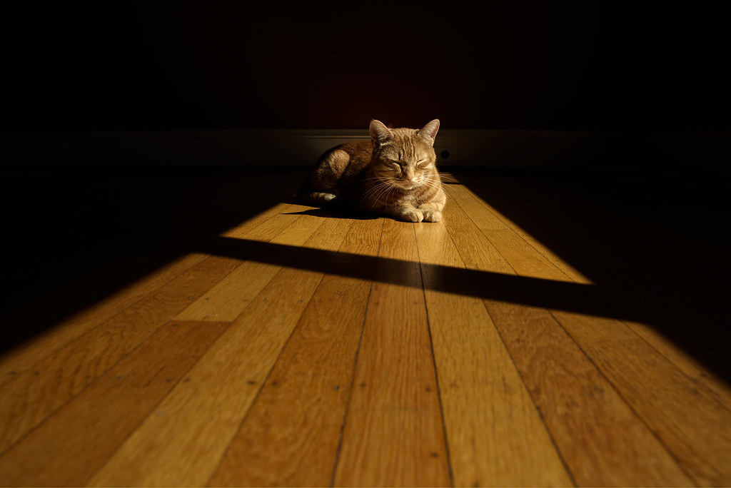 Our cat Sam sleeps in the sunlight on the hardwood floor of our dining room