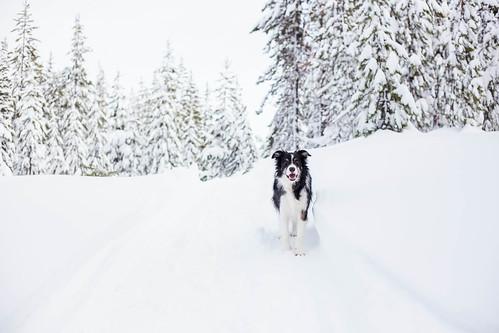 Ray Benson Snow Park-7984