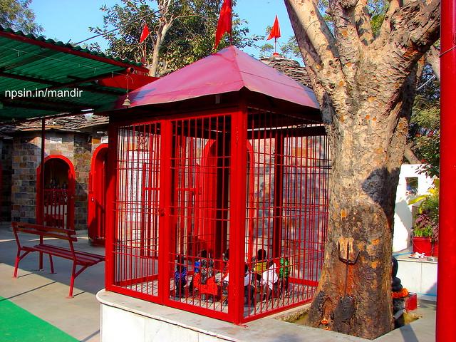 Shri Navgrah Dham with Peepal Tree