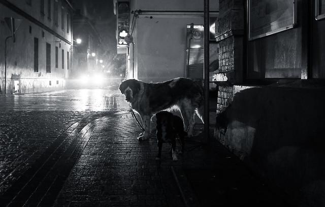 Dog's Life   Day 167 / 365