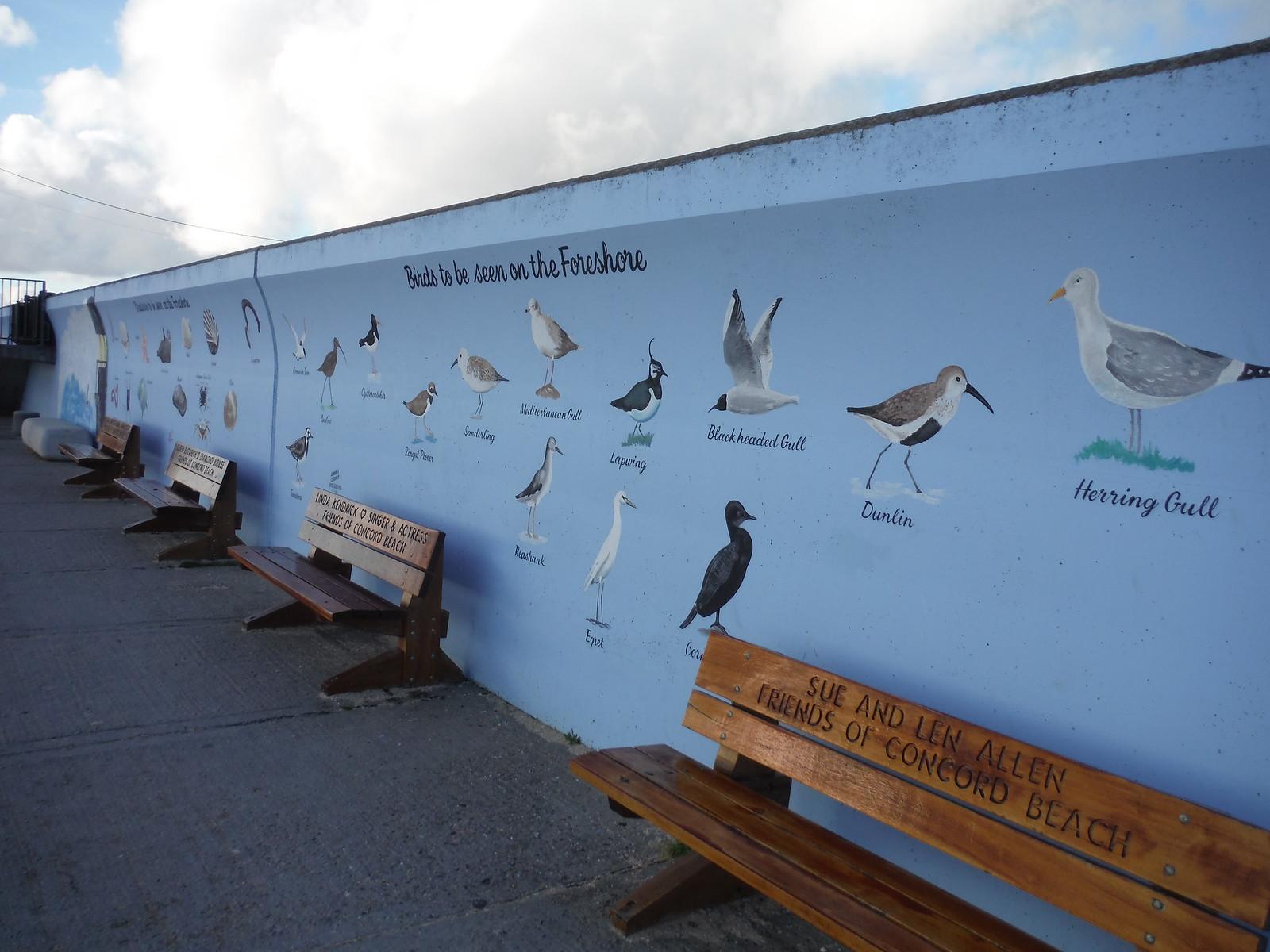 Birds and Shells mural, Concord Beach, Canvey Island SWC Walk 258 Benfleet Circular (via Canvey Island)